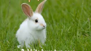 What is a Rabbit ? / Rabbit Facts !