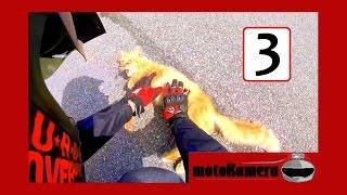 Motocykliści ratują zwierzęta - motoKamera #3