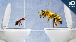 How Do Insects Poop?