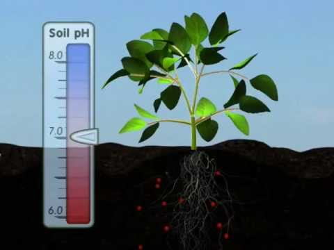 Plant Nutrition: Mineral Absorption (Part One)