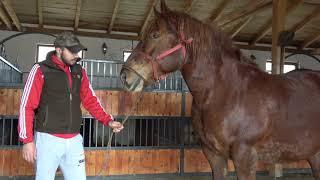 Caii lui Sile Chetan de la Tarnaveni, Mures - 2019