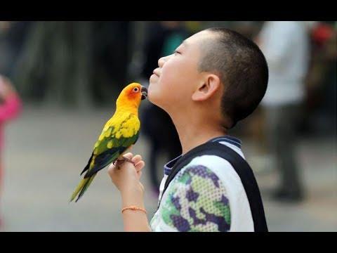 Cute Parrots Part #18 – A Funny Parrot Kiss Owner Video Compilation 2017 – Pet Cute Animals