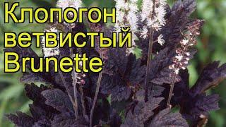 видео Клопогон даурский Cimicifuga dahurica