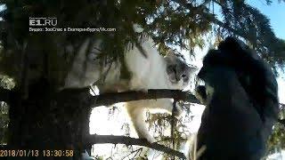Под Первоуральском спасли кота, который неделю просидел на дереве