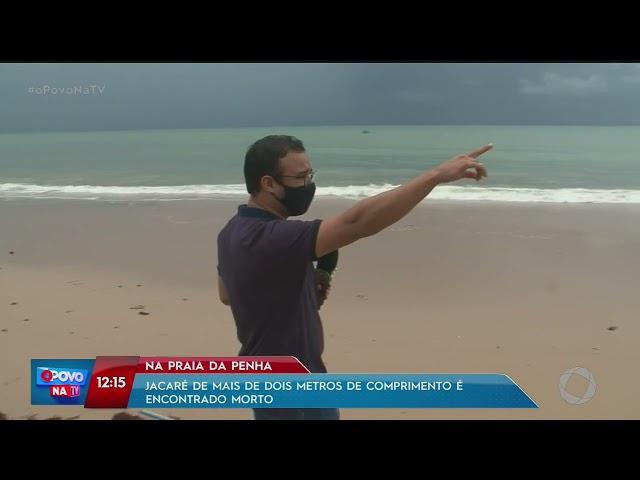 Jacaré de mais de dois metros de comprimento é encontrado morto na Praia da Penha- O Povo na TV