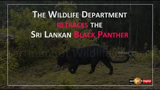 REDISCOVERED : The Sri Lankan Black Panther roams once again