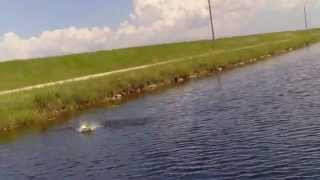 "Bass eat baby Duck lure..Part 3 ""Get Crushed"" Tamiami Canal"