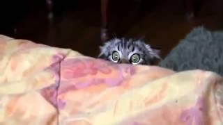Мега жесть!! дикий кот котёнок смотрит ужасы