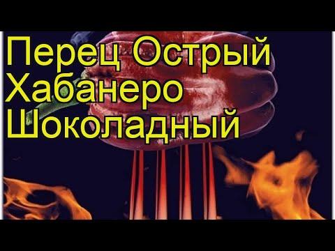 Перец острый Хабанеро Шоколадный. Краткий обзор, описание capsicum annuum Habanero Shokoladnyj