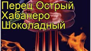 видео Перец : Перец острый Хабанеро Шоколадный