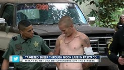 Targeted sweep through Moon Lake in Pasco Co.