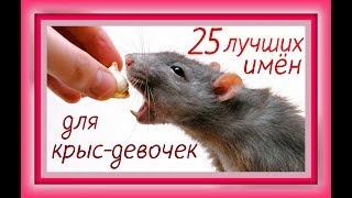 Клички имена для декоративных крыс / Как назвать крысу/ Домашние декоративные крысы