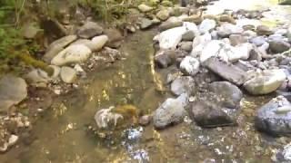 Gloryhole Johns creek
