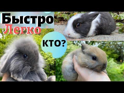 Как легко определить пол кролика. Правильное определение пола у крольчат