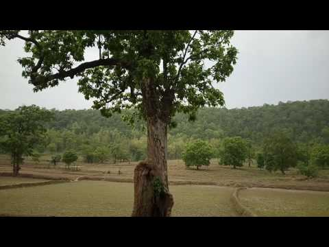 Amazing HD Travel Video Forest and Hills of India