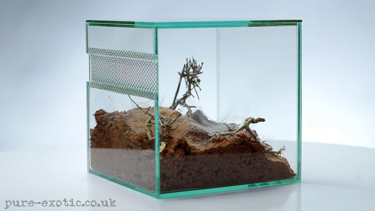 how to build a desert terrarium