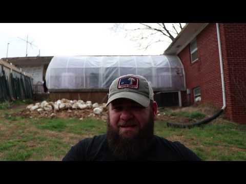 Growing Mushrooms: Using Spent Blocks