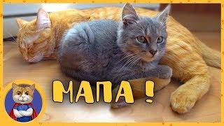 Спасенный котенок Кузя знакомится и играет с Рыжиком, Печенькой и Гаффи. Печенька усыновил Кузю