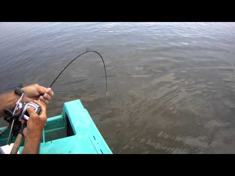 селитрон форум рыбаков