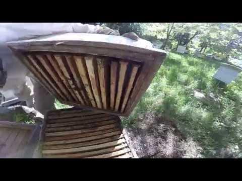 Как убрать роевое состояние пчел видео
