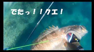 魚突き行ってきました まだまだ未熟者ですが、ルールを守ってやってます...