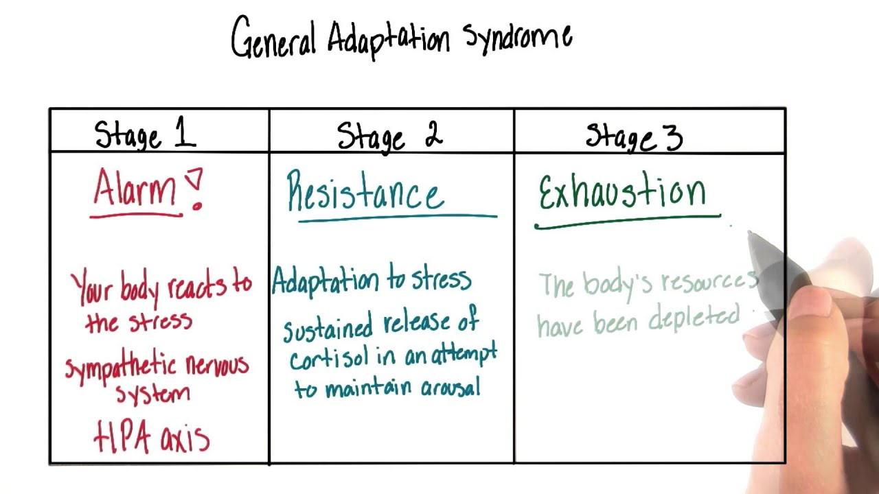 general adaptation syndrome - intro to psychology - youtube, Skeleton