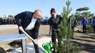 İlham Əliyev Bakının Xətai rayonunda ağacəkmə aksiyasında iştirak edib