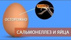 ОСТОРОЖНО: САЛЬМОНЕЛЛЕЗ и ЯЙЦА! (часть 5)  Все про куриные яйца - должен знать каждый о сальмонелле