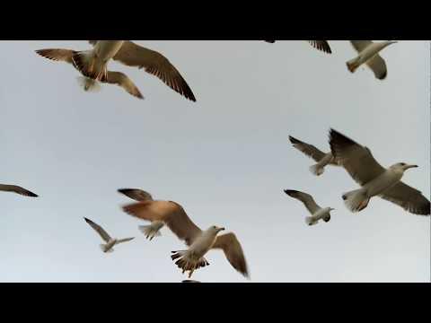 NATURE VIDEO OF OKHA