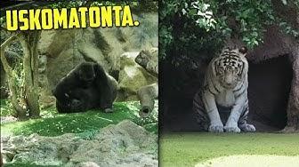 Kävin Euroopan Parhaassa Eläintarhassa.