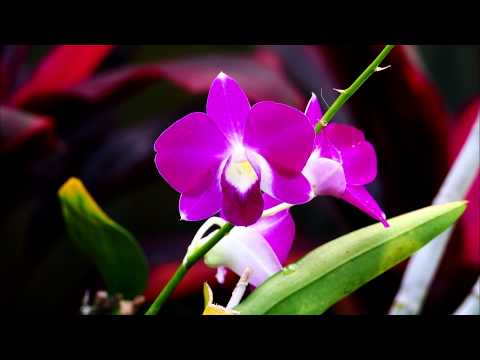 Bali Orchid Gardens