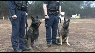 Greenville City Police K-9 Unit