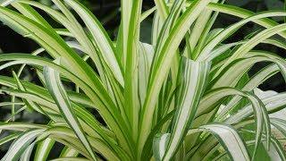 Wenn du diese Pflanzen im Haus hast, pass gut darauf auf, denn sie sind wahre Schätze!