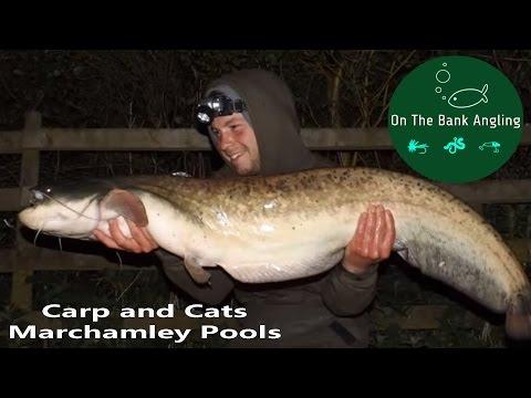Fishing for Catfish and Carp At Marchamley Pools - Bagging up!
