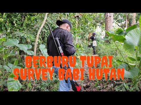 Berburu Tupai Squirrel Hunting Mencari Babi Hutan Sukmo Ilang Hunter