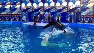 Дельфинарий Сочи 2016(через YouTube Объектив., 2016-07-17T17:49:18.000Z)