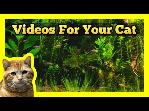Videos for your Cat - Longest Aquarium Fish Tank Video On Youtube