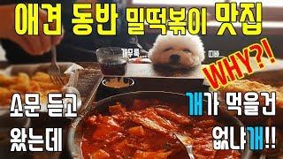 [민샬라] 제주도 한림 애견동반 밀떡볶이 지존 맛집!!…