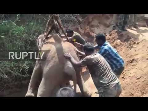 India: Elephant calf rescued from bottom of 21-metre well