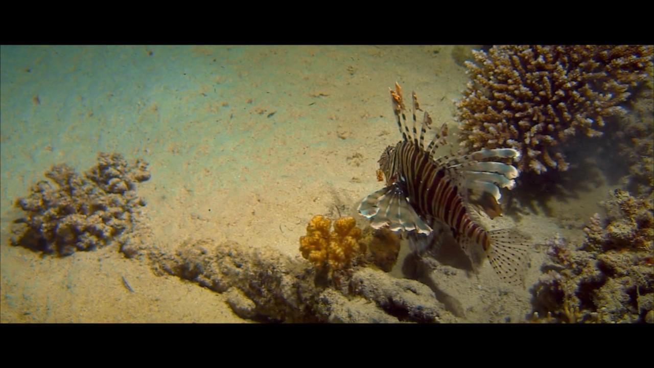 Альдабра. Путешествие к таинственному острову - Trailer