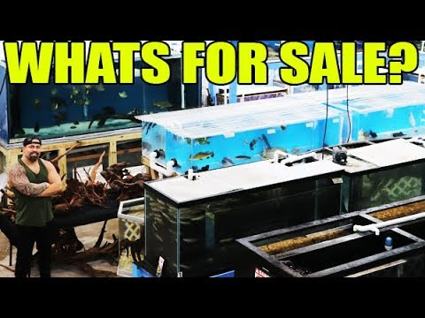 MONSTER FISH SHOPPING NETWORK * What's In Stock?
