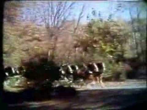 Original Budweiser Clydesdale Commercial