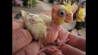 Приколы с попугаями смешное видео ютуб приколы с животными