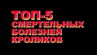 ТОП-5 СМЕРТЕЛЬНЫХ БОЛЕЗНЕЙ КРОЛИКОВ (16+)