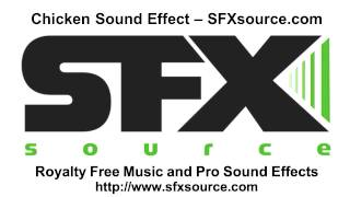 Chicken Squawk Sound Effect - SFXsource.com