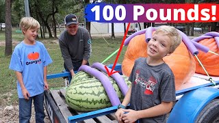 Cutting into Jack's 100 Pound Watermelon!