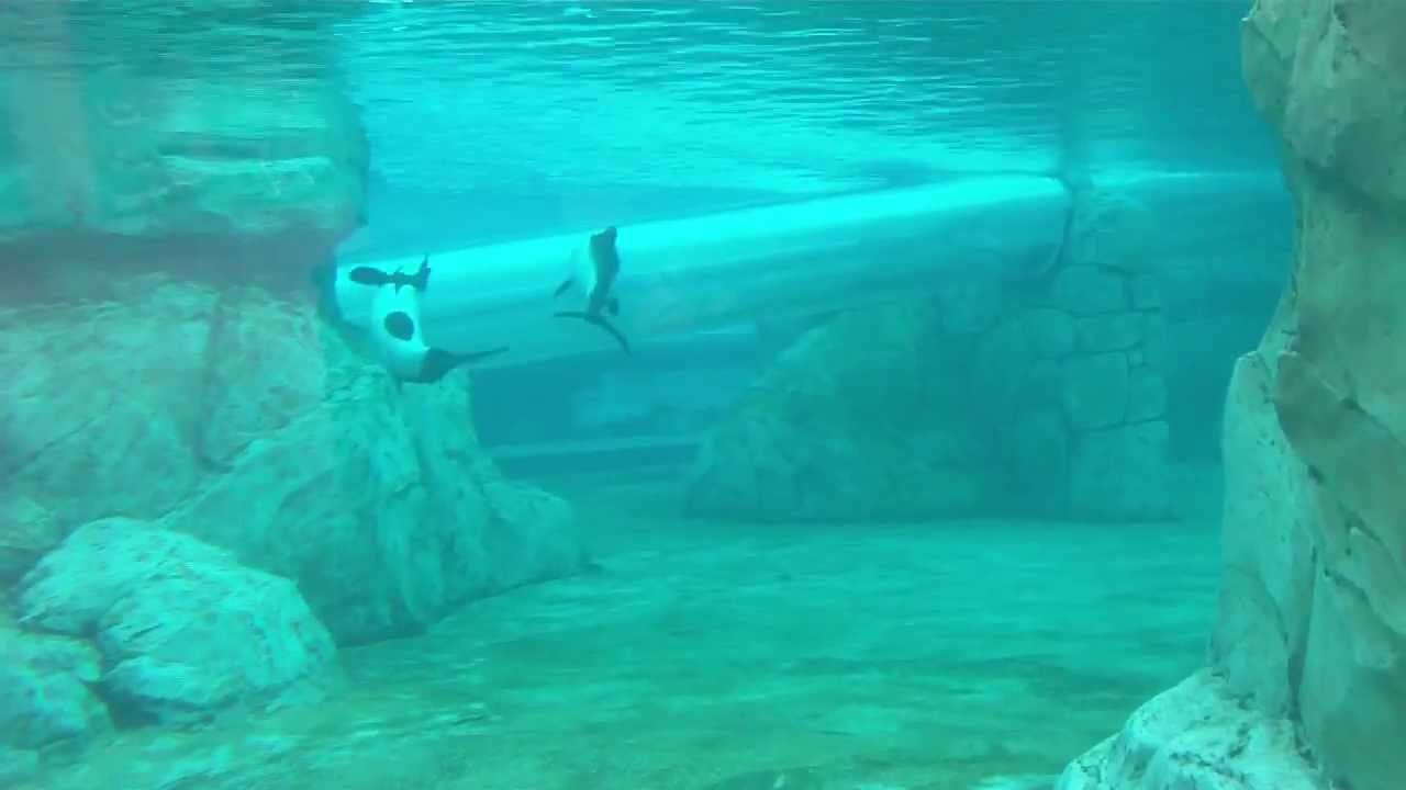Aquatica Amusement Park. Dolphins under water roller ...