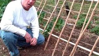 Trellis Construction