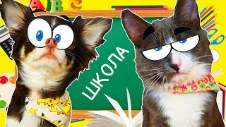 ЮМИ и АЛИСА ИДУТ в ШКОЛУ ПОКЕМОН и КОТОМОНСТР готовятся к ШКОЛЕ | Magic Pets