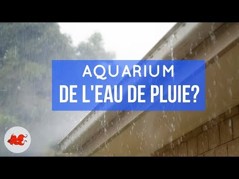 Eau de pluie pour aquarium
